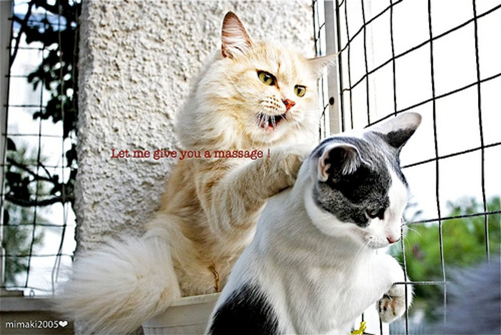Cute Kitten Videos Kitty Massages