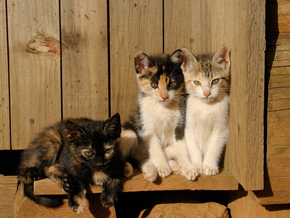 Three Kittens Rescued from Landfill