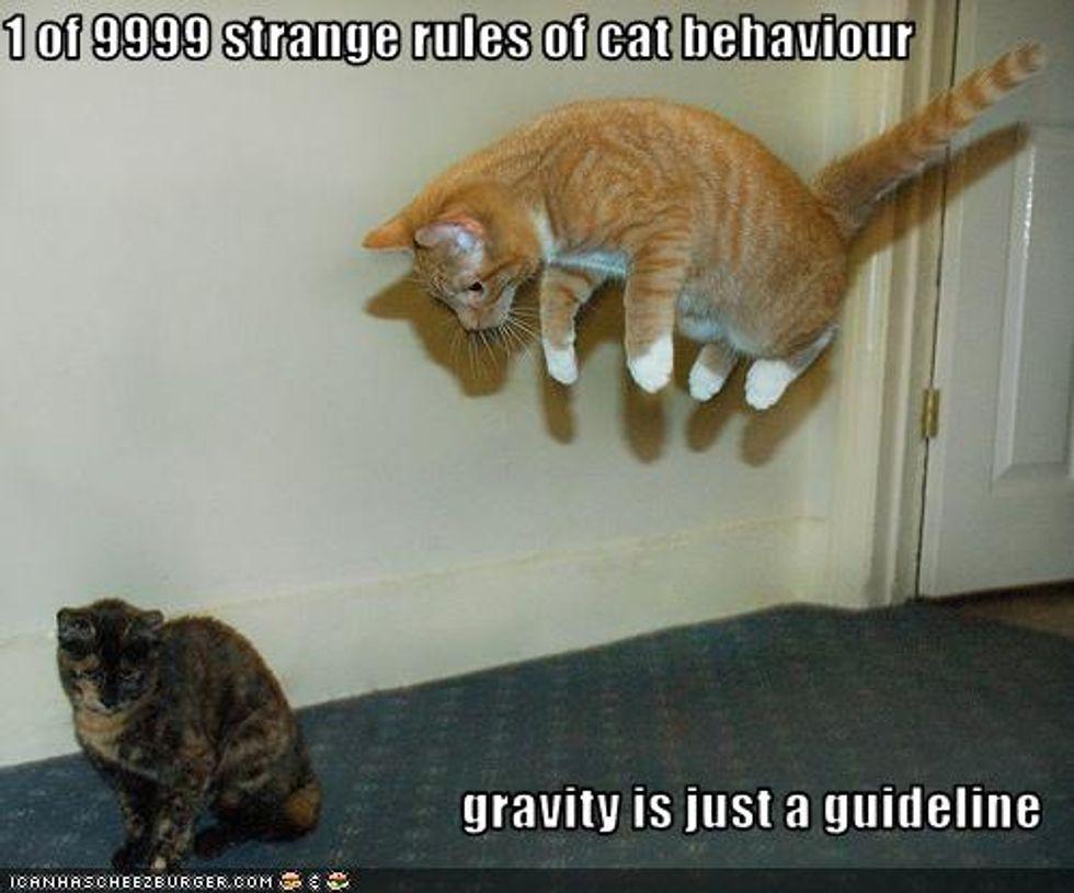 Cheezburger Time Kitten vs Gravity