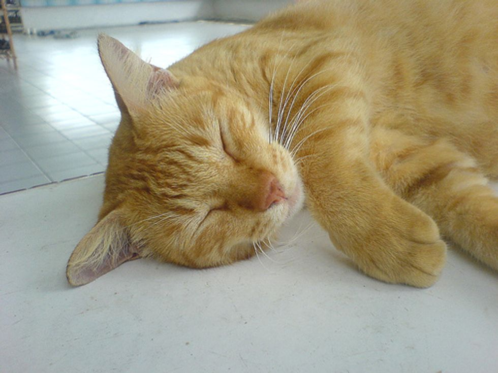 Cat Travels 1400 Miles on Luxury Ferry as a VIP Passenger