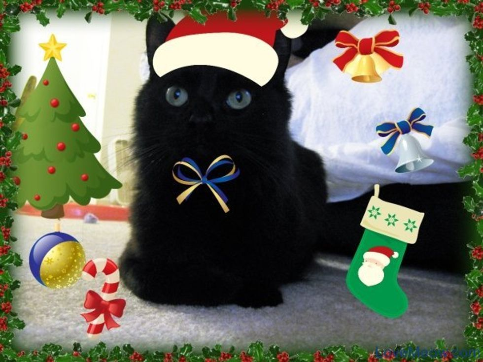 How to Turn a Regular Cat Photo into a Jolly Catmas Kitten Picture