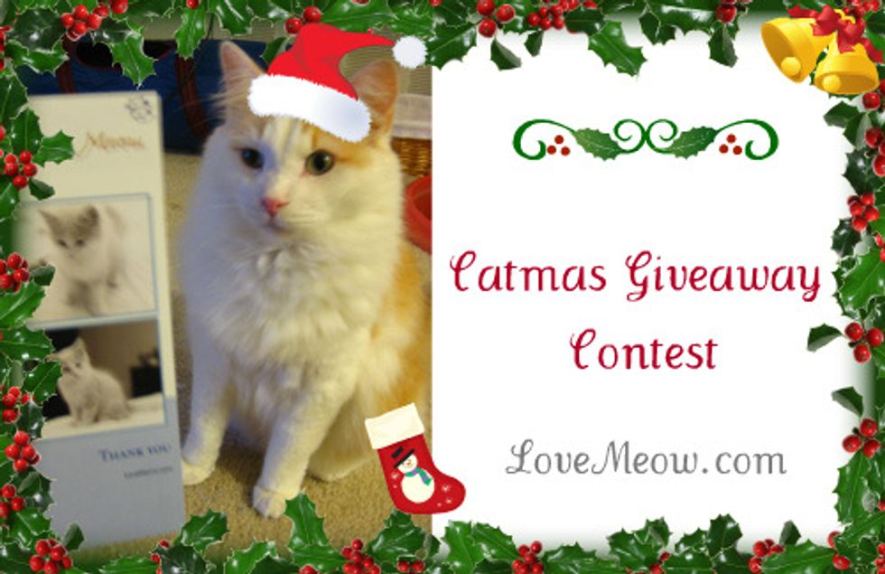 Winners of Catmas Giveaway Contest
