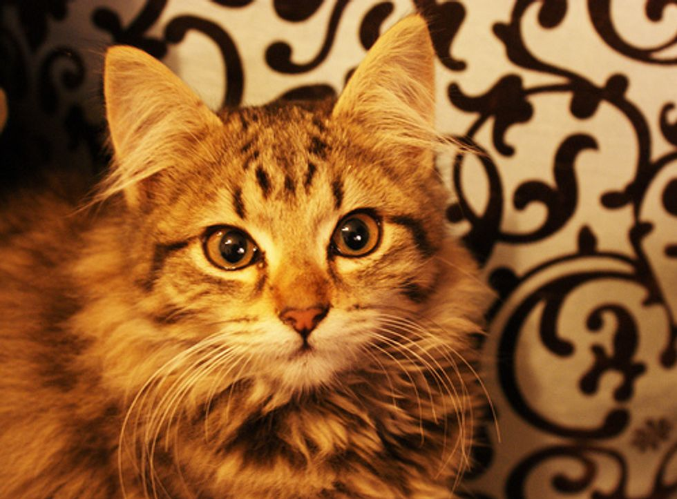 Voting Begins December Cat of the Month