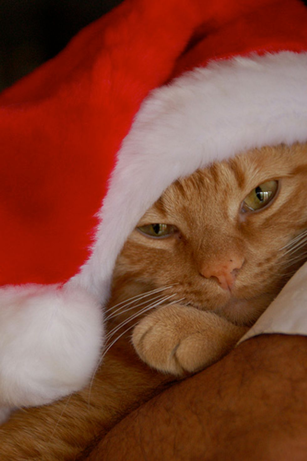 Special Christmas Gift Missing Cat Found After 12 Years