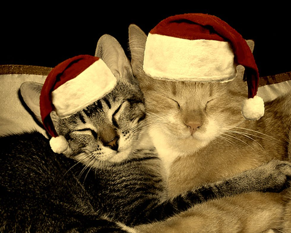 Merry Christmas Kittens and Cats