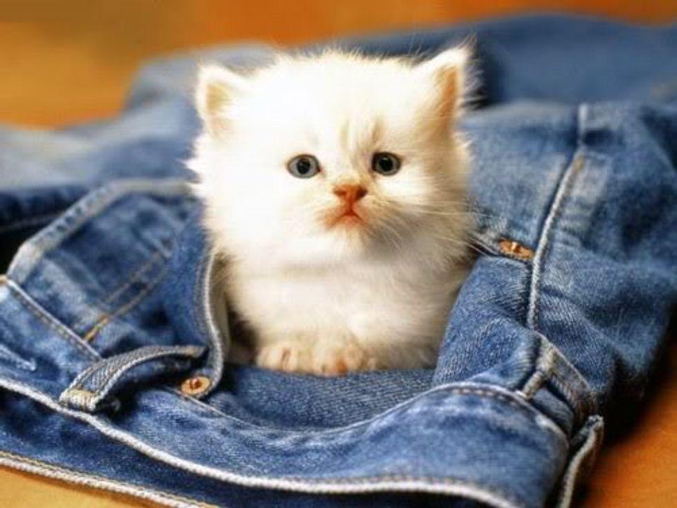 Cat Video Kitten Attacks Pants