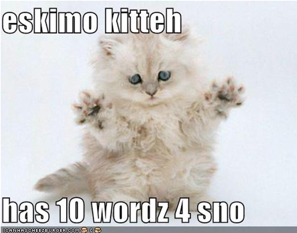 Winter Lolcat Kittens