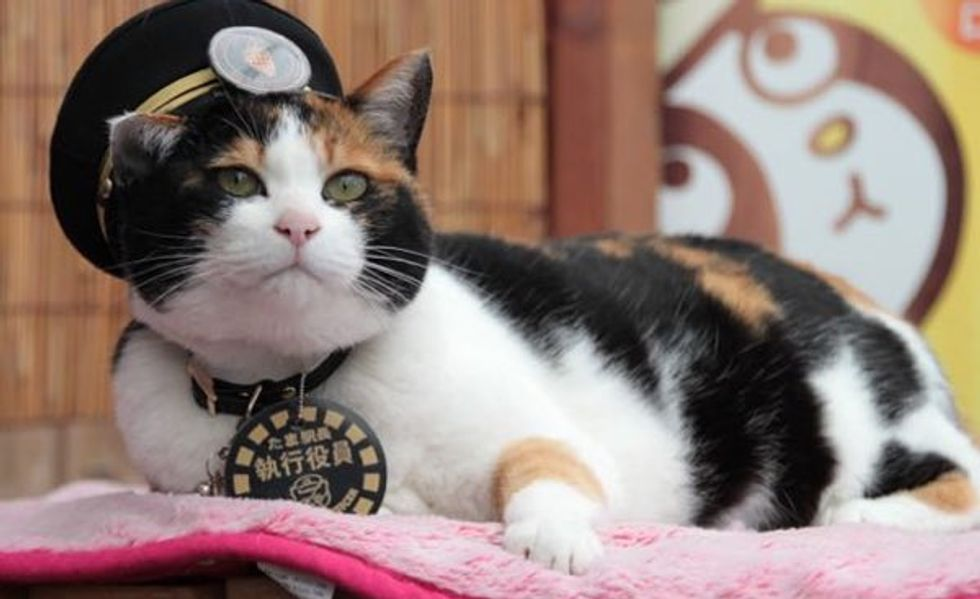 Station Master Calico Cat Tama Promoted to Corporate Executive
