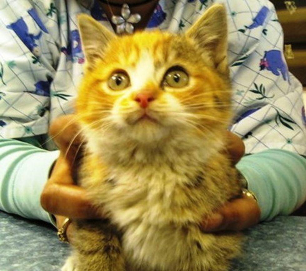 Kitten Rescued from Bridge in Freezing Temperature