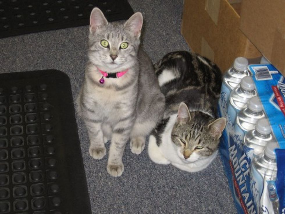 Library Cats from All Over the World