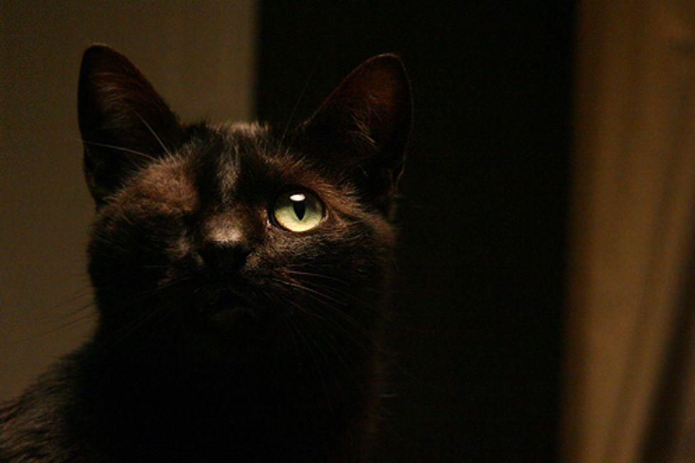 Black the One Eyed Cat