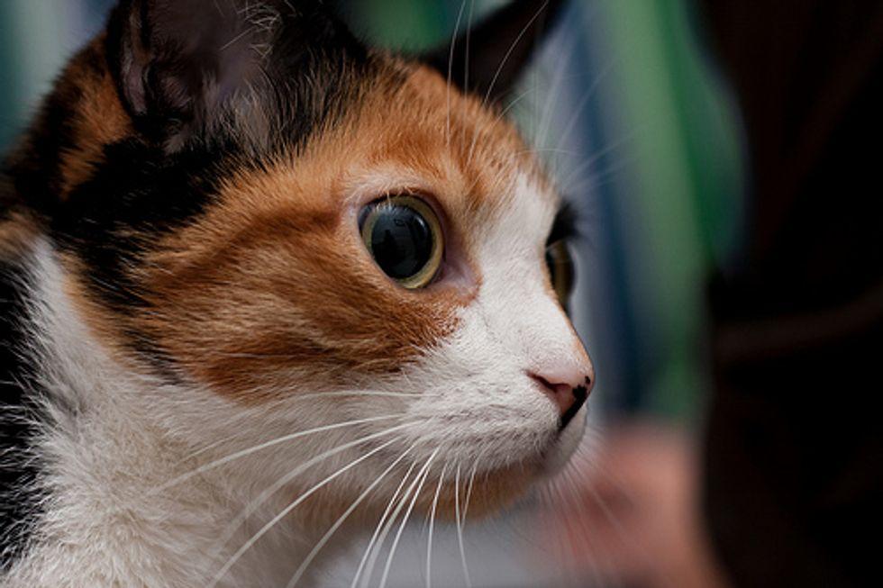 Mysterious Cat Eyes