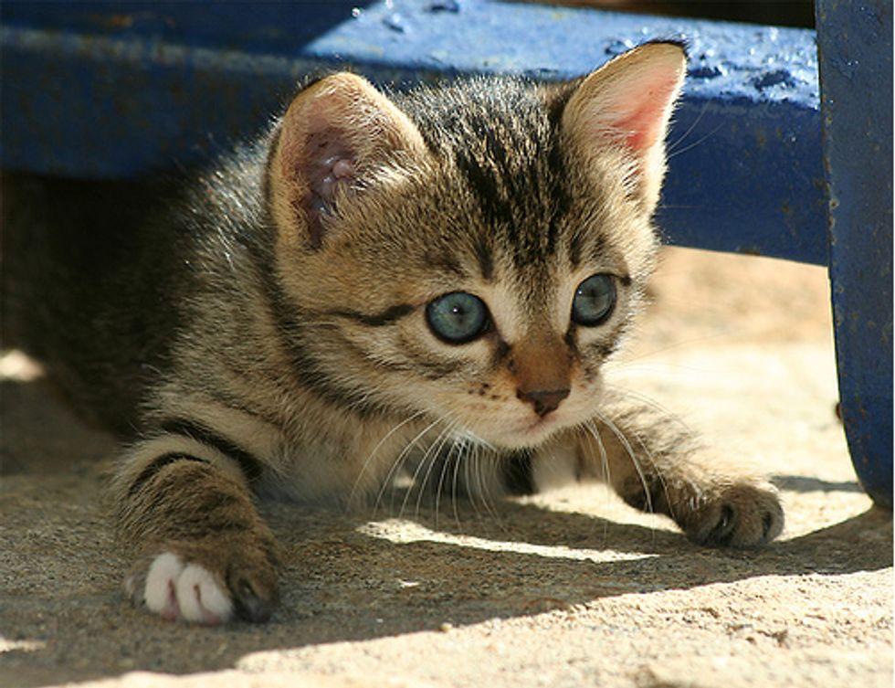 Beautiful Feral Cats
