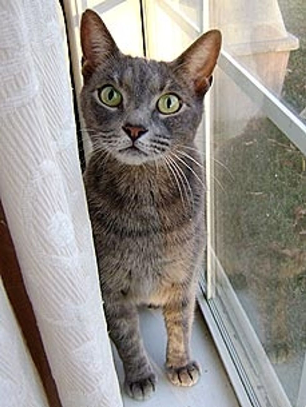 Cat was Found One Year After Hurricane Ike