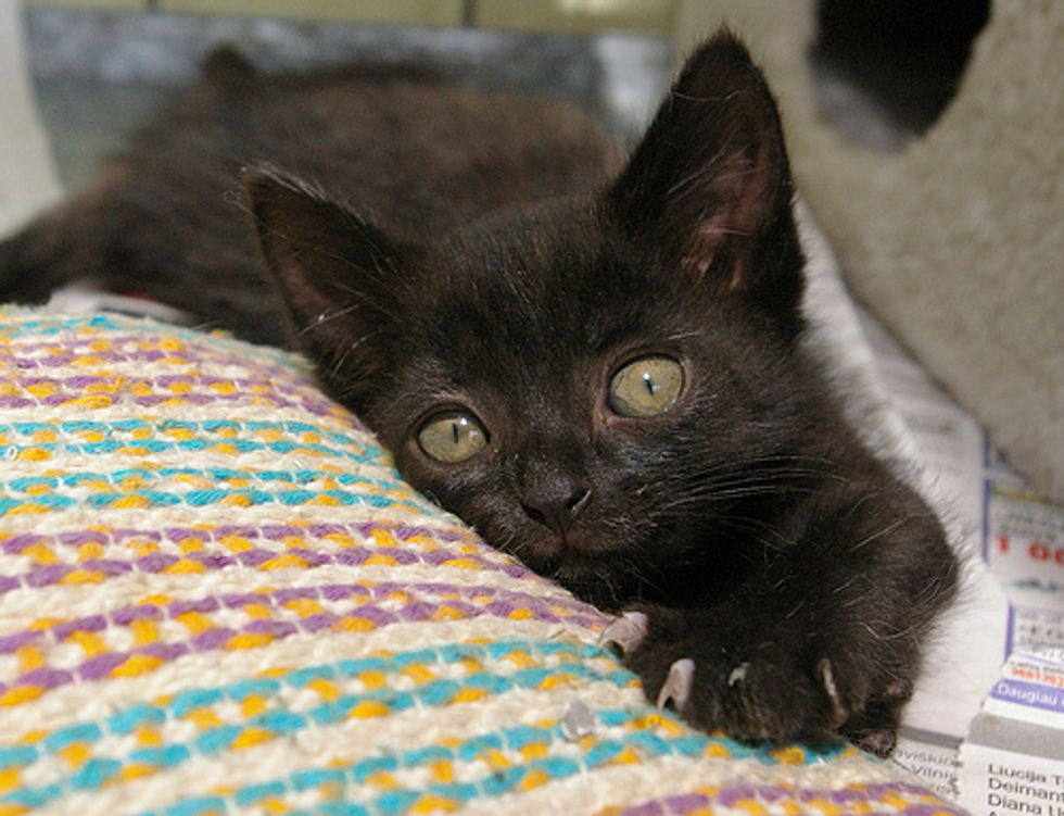 Adorable Kittens from SOS Animals