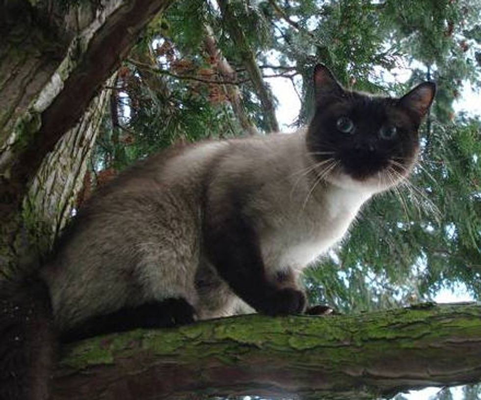 Rescuer for Cats Stuck in Trees