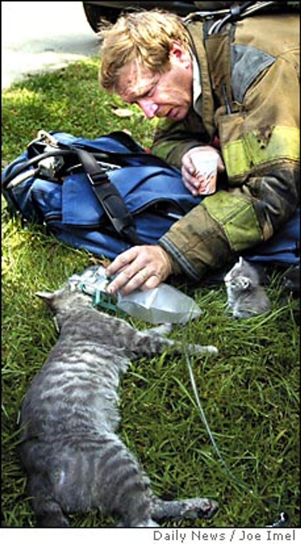 Firefighter Rescued Cat from Flames