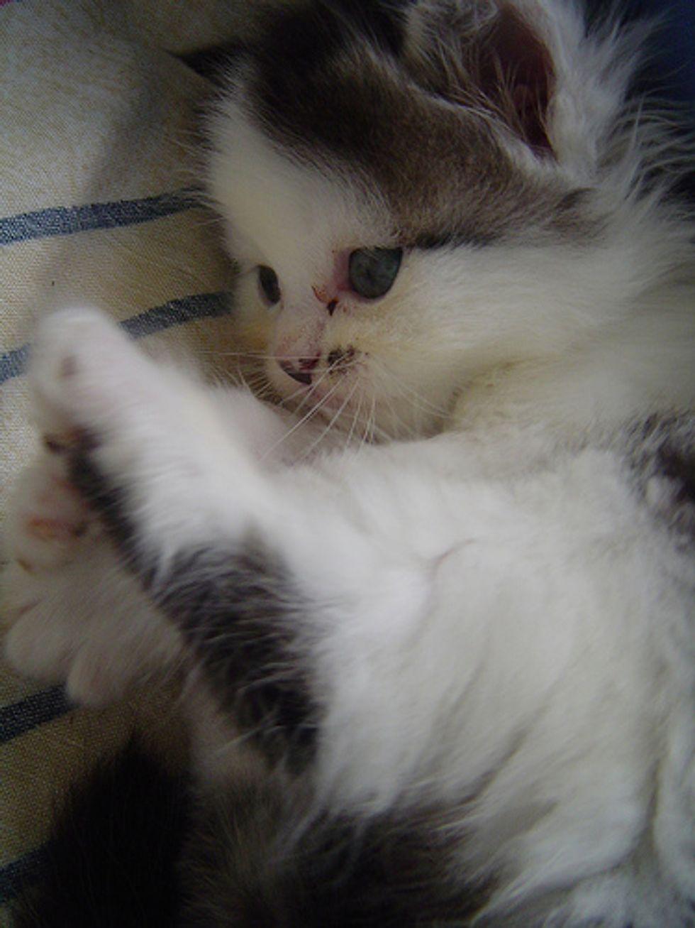 Mels Beloved Kittens