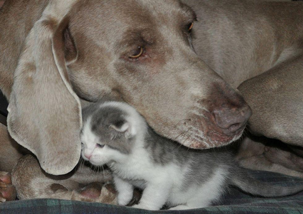Kitten Puppy Love