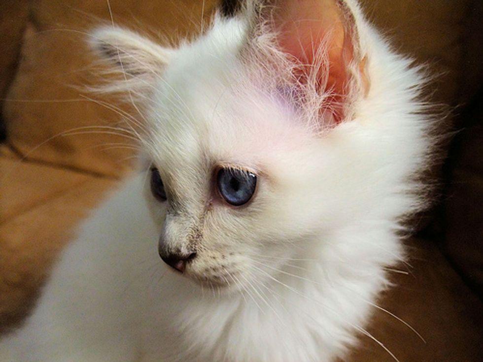 Adorable Kitten that Melts Your Heart