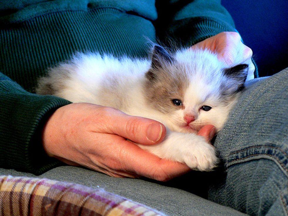 Affectionate Kittens