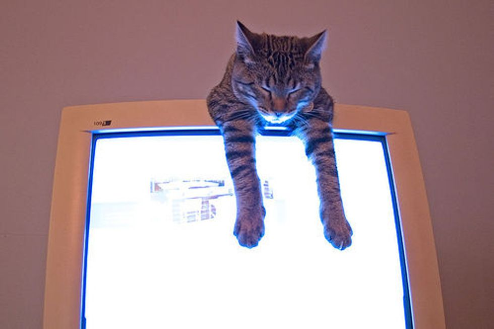 Microsoft Believes Kittens Could Solve Spam