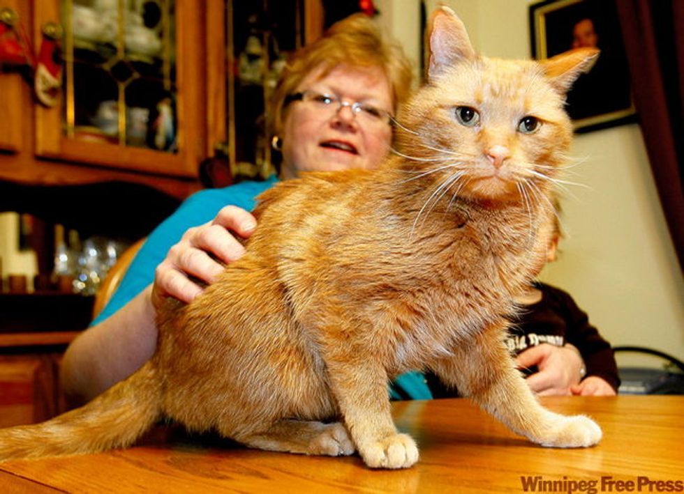 Cat Found After 14 Years
