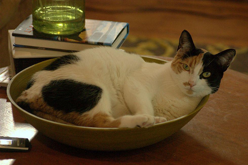 Cats Love Bowls
