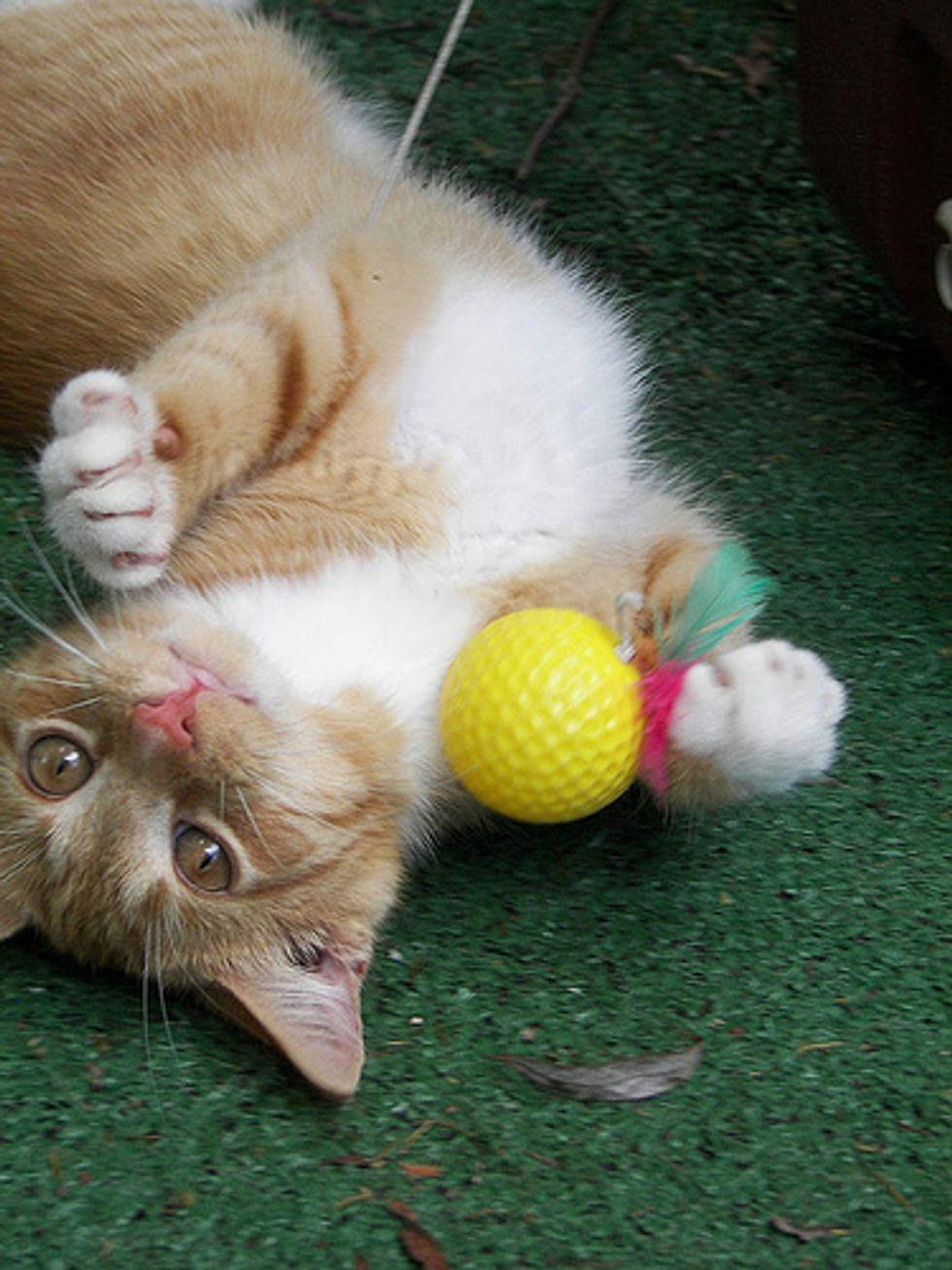 Top 15 Cat Qualities