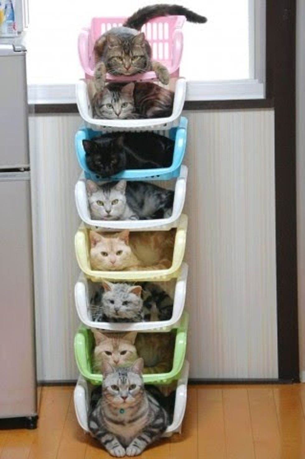 New Way to Organize Your Cats