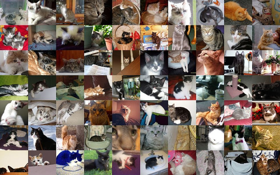 Feb Cat of the Month Entries