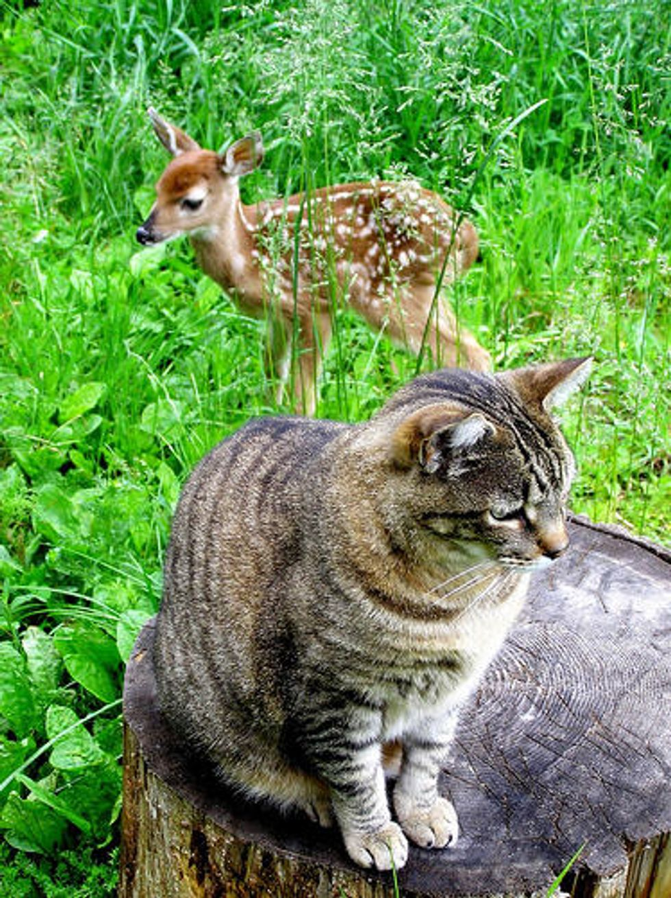 Cats and Their Horse and Deer Friends