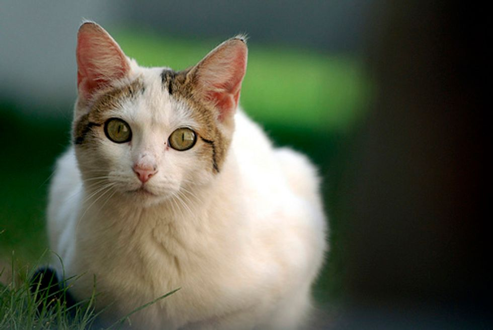 Stories of Feral Cats