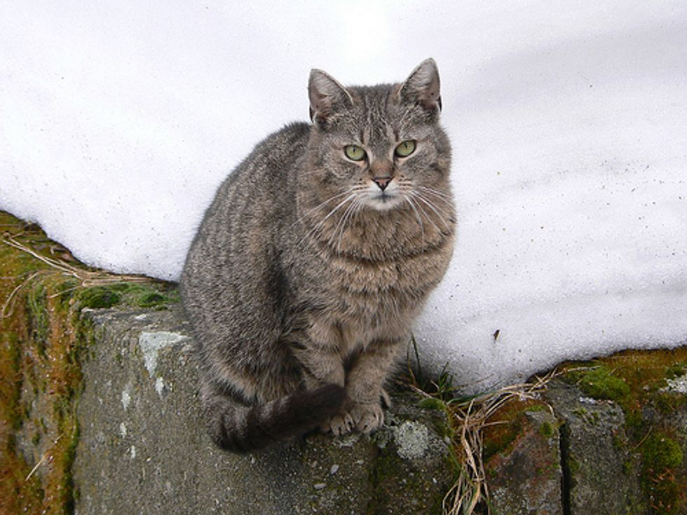 Tabby Cat Jumped 40ft off Building Uninjured