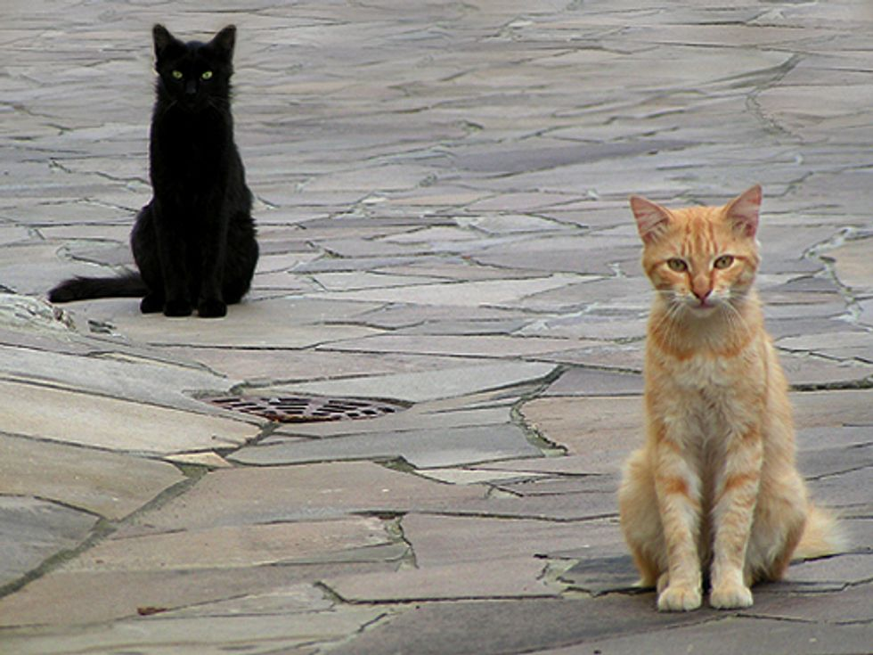 Feed Strays For 30 Days? They're Yours