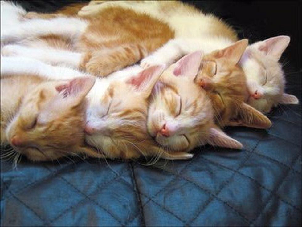 Sleepy Caturday