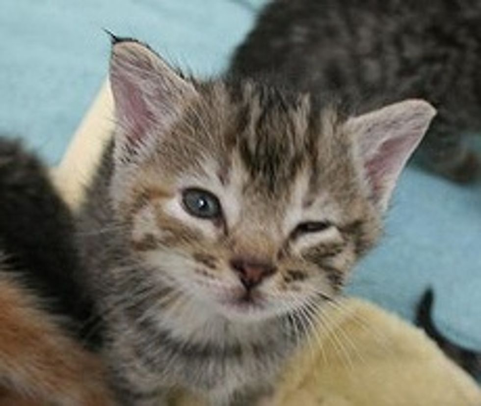 Seven Lucky Kittens