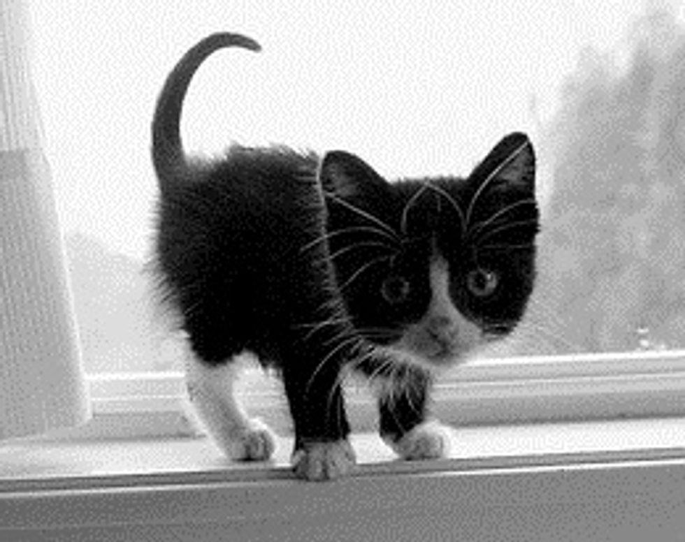 Tiny Tuxedo Kitty and Window