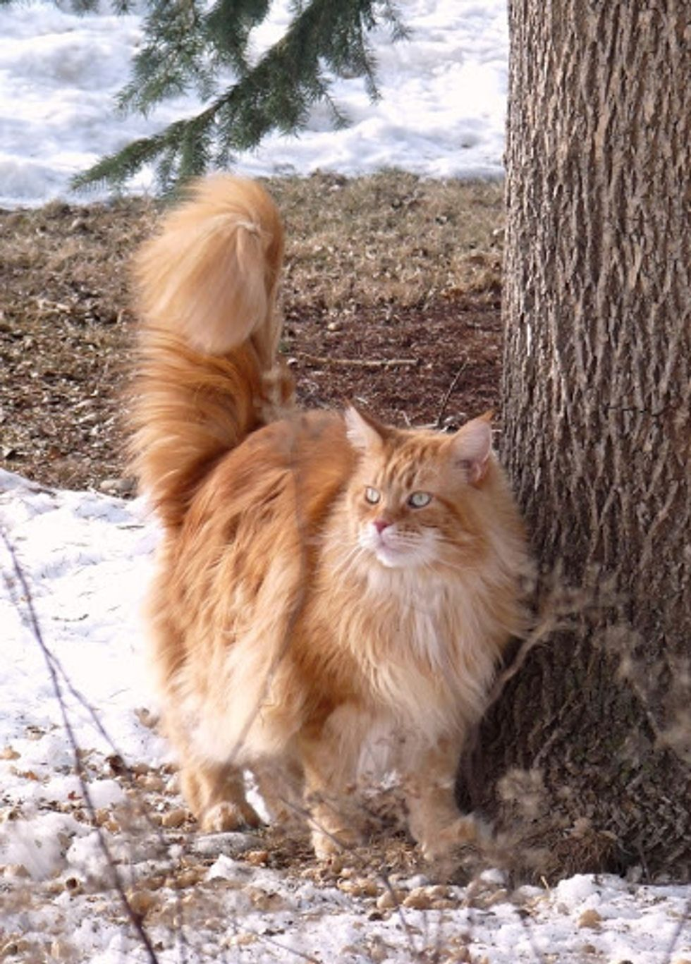 February Cat of the Month Results
