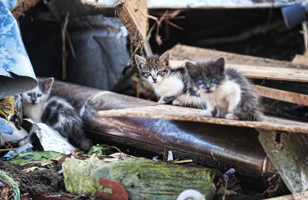 Kittens Remain Amid House Debris in Chile