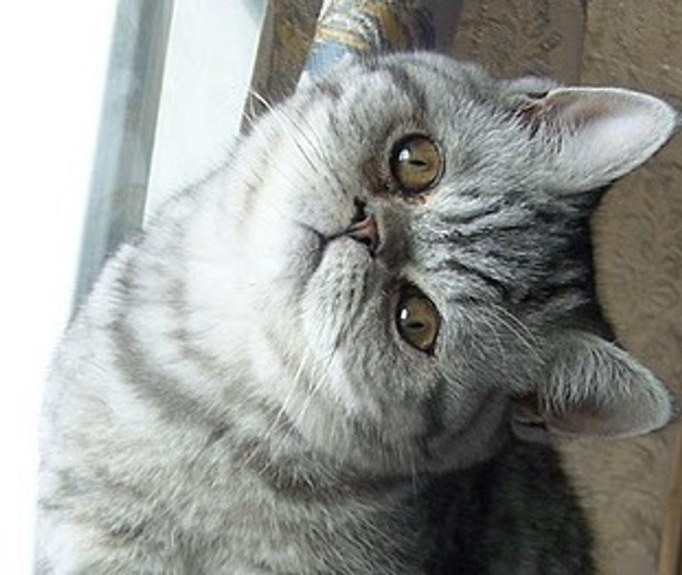 Momo the Funny Cat