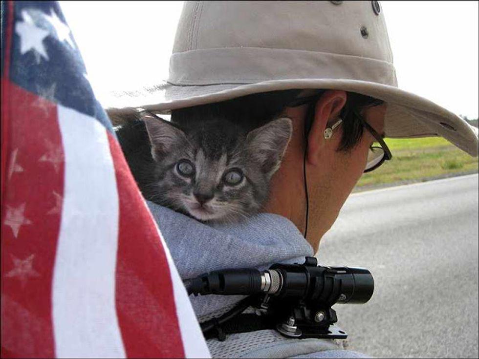 Backpacking Cat Amazing Story
