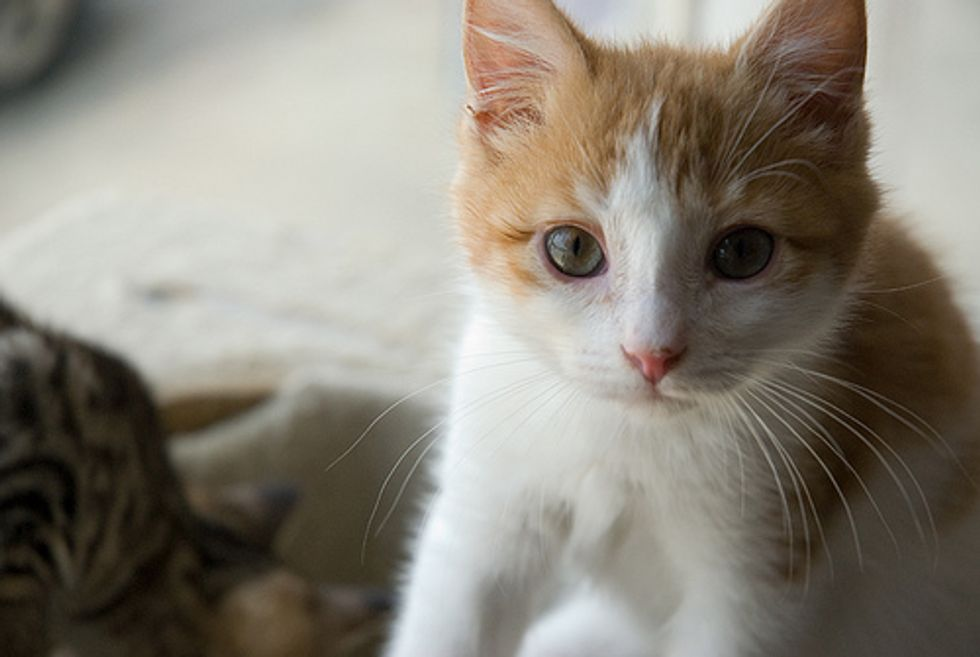 Group Calls for Ban on Selling Cats and Dogs Purchased from Puppy Mills