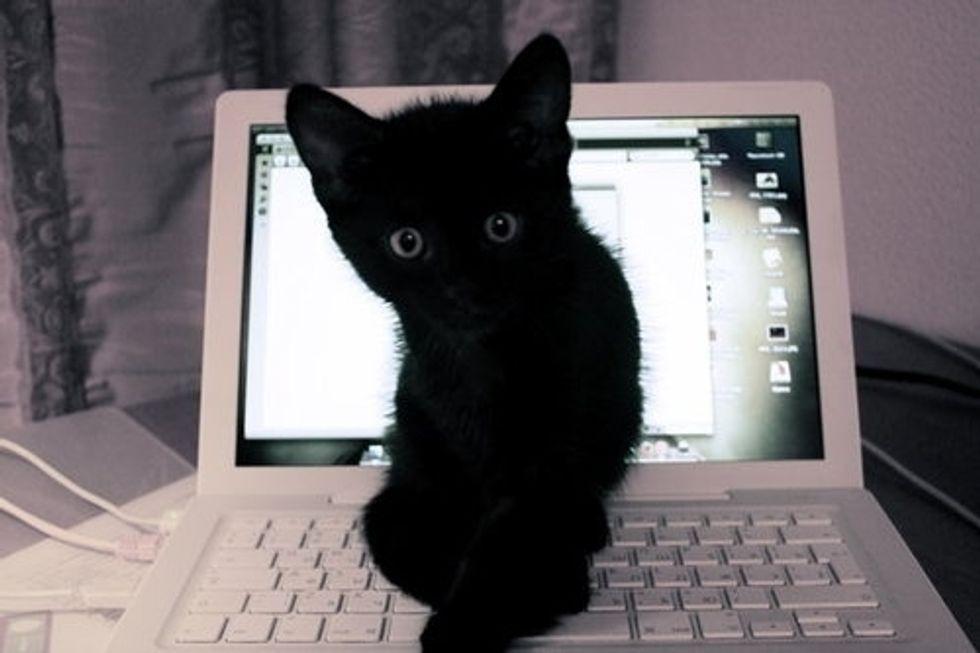 Computer Kitty