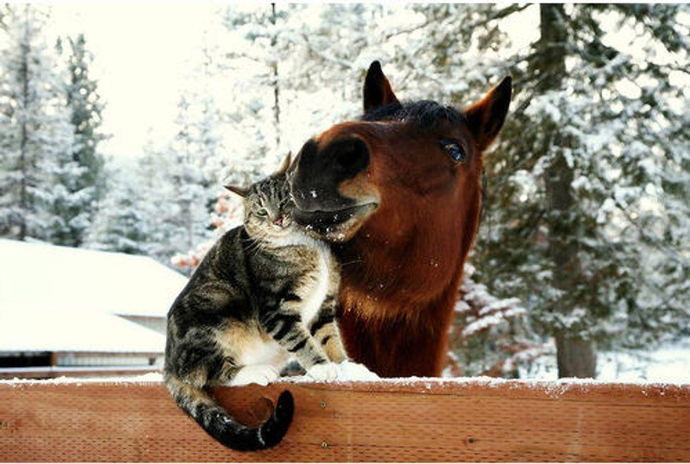 Kittens Love Horse