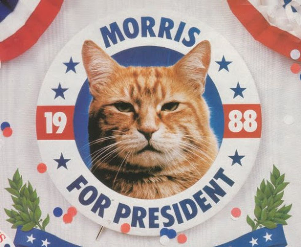 Morris the Cat First Feline Presidential Candidate