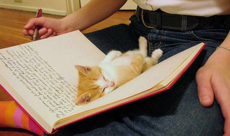 Very Sleepy Caturday Kitties
