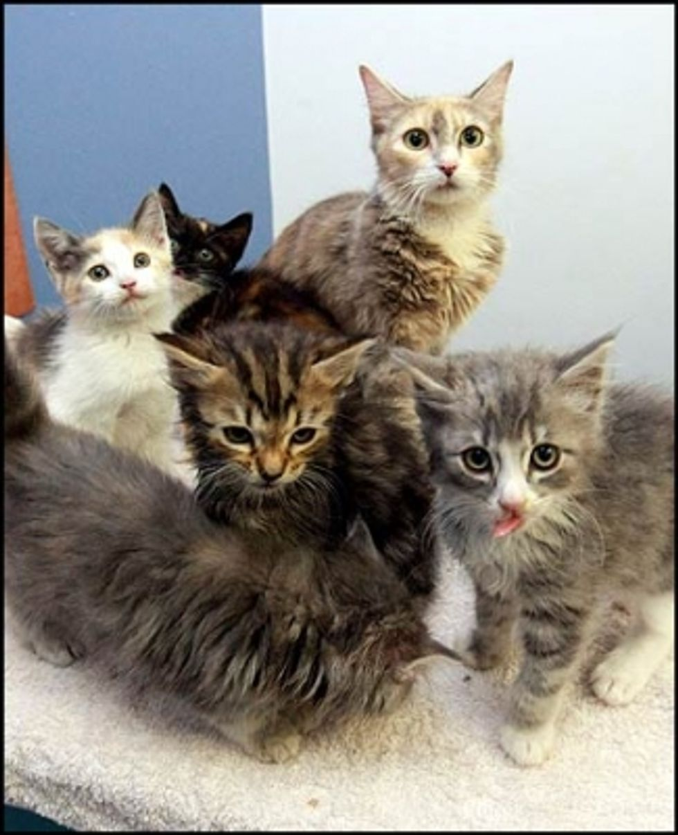 Rescued Kittens Reunited with Mother Cat