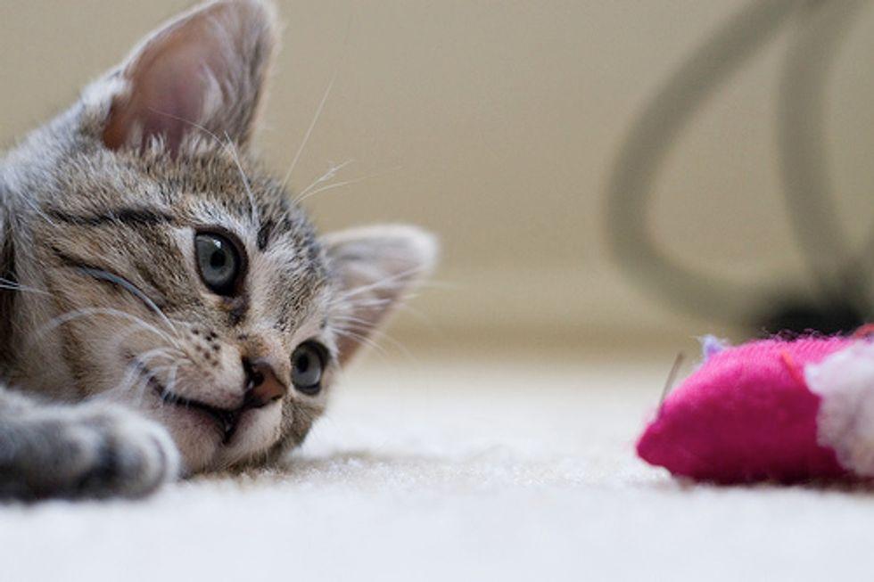 Kittens' Favorite Toy