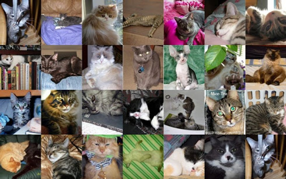March Cat of the Month Entries